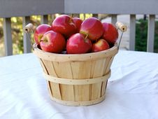 Free Apples Stock Images - 419674