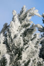 Free Hoarfrost Royalty Free Stock Images - 4108449