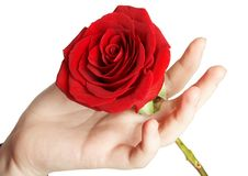 Free Rose In Hand Stock Image - 4100011