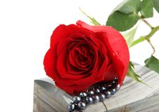 Rose Lying On Casket With Pearls Stock Images