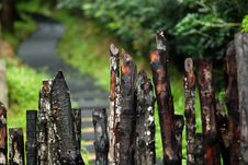 Free Wooden Fence And Plant In The Garden Royalty Free Stock Photos - 4101888