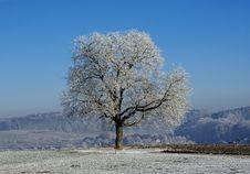 Free White Beauty Stock Photos - 4102093