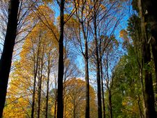 Colorful Leave And Fall Forest Royalty Free Stock Photos