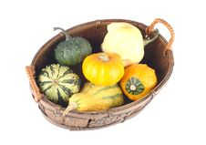 Free Mini Pumpkins In A Basket Stock Image - 4102421