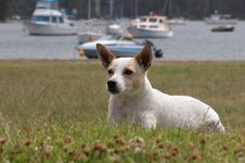 Wazzup Dog Royalty Free Stock Photo