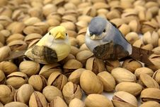 Free Pistachios And Birds Stock Images - 4104244