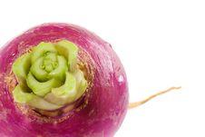 Free Turnip Bulb Royalty Free Stock Photo - 4105575