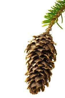 Free Fir-cone Stock Photos - 4105973