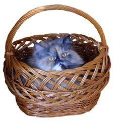 The Cat In The Basket Royalty Free Stock Images