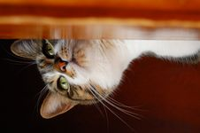 Free Cat S Eye View Stock Image - 4107801