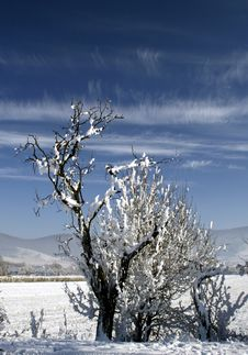 Free Frosty Branches Stock Photos - 4108693