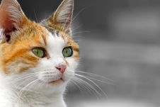 Free Cat Portrait Stock Photography - 4108912
