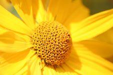 Free Yellow Flower Royalty Free Stock Image - 4109776