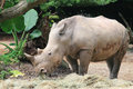 Free White Rhino Stock Photos - 4114963