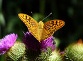 Free Yellow Butterfly Stock Images - 4115364
