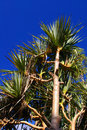 Free Strong Tropical Palm Tree Against Sky Background Stock Photo - 4118870