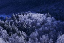Free Trees With Snow Stock Photos - 4110693