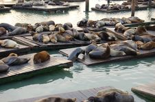 Free Seals Stock Photography - 4111482