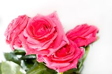 Free Red Roses Royalty Free Stock Photography - 4112757