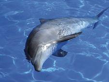Free Dolphin Stock Image - 4114901