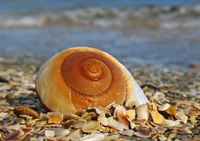 Free Shell On The Beach Stock Photo - 4116200