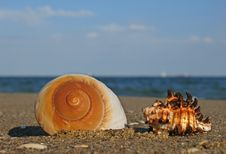 Free Shell On The Beach Royalty Free Stock Photos - 4116288