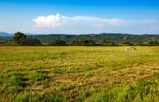 Free Prairie Landscape With Two Cows In The Distance Royalty Free Stock Image - 4116326