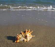 Free Shell On The Beach Royalty Free Stock Photography - 4116397