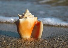 Free Shell On The Beach Royalty Free Stock Photos - 4116438