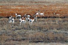 Free Antelope Stock Images - 4117314