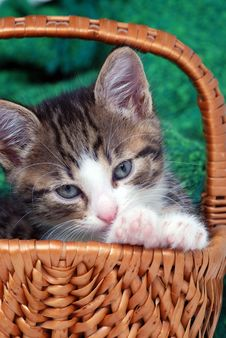 Free Kitten In Small Basket Royalty Free Stock Photography - 4117357