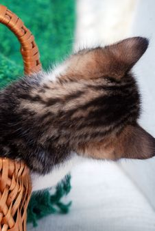 Free Kitten Leaning Out Of Small Basket Stock Image - 4117361
