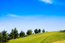 Beautiful Meadow And Trees Stock Image