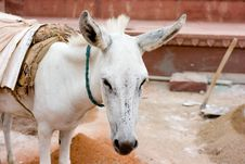 Free Donkey Working On Building Stock Photography - 4117592