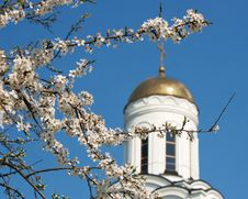 Free Blooming Branch Of Cherry On A Background Of Church Stock Images - 41100944