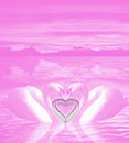 Free Pink Valentine Swans With A Heart Royalty Free Stock Image - 4123036