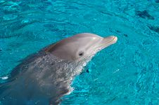 Free Dolphin Stock Photography - 4120212
