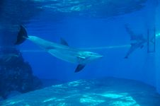 Free Dolphins Stock Photography - 4120222