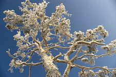 Free Snowy Winter Tree. Stock Images - 4120454