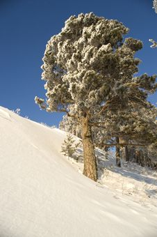 Free Snowy Winter Tree. Stock Image - 4120461