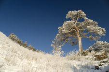 Free Snowy Winter Tree. Royalty Free Stock Photography - 4120477