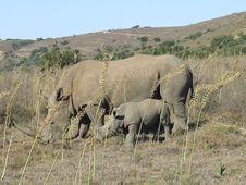 Free Rhino And Calf Royalty Free Stock Image - 4120726