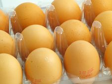 Free Eggs In The Blister Royalty Free Stock Photo - 4121145
