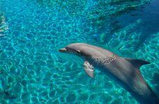 Free Dolphin Stock Photography - 4121342