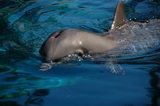 Free Dolphin Stock Photo - 4121370