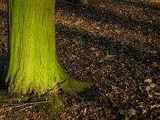 Free Sunlit Woodland Stock Image - 4121431