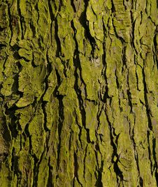 Free Tree Bark And Green Lichen Stock Photos - 4123973