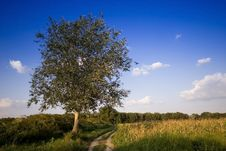 Free Tree- Green Field Stock Photos - 4125203