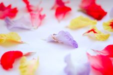 Free Wedding Rings Around Petals Flowers Stock Photography - 4125462