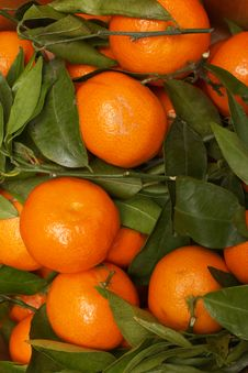 Free Orange Fruits Stock Images - 4125484